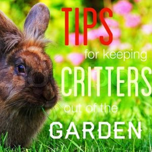keep-critters-out-of-garden